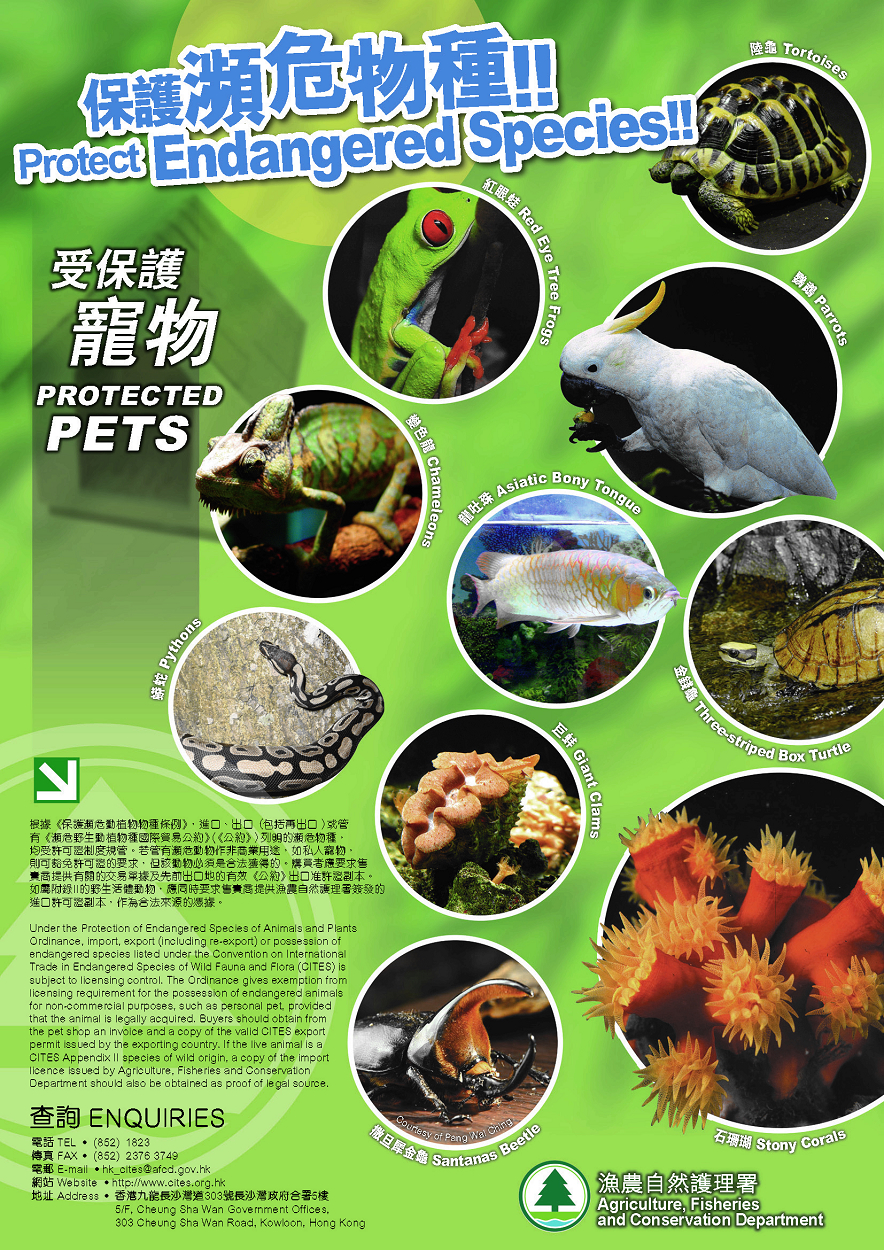 endangered species animals and plants essay