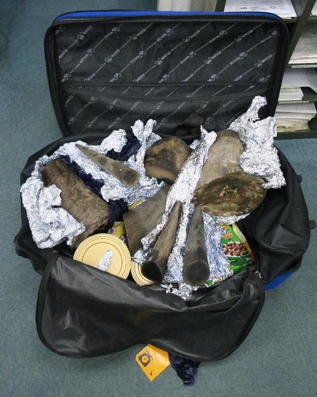 A traveller who smuggled rhino horns was convicted for violating the Protection of Endangered Species of Animals and Plants Ordinance, and was sentenced to 24 months' imprisonment today (August 3). Photo shows rhino horns found by Customs officers in the baggage.