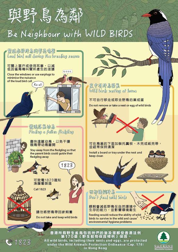 与 野 鸟 为 邻 - 海 报