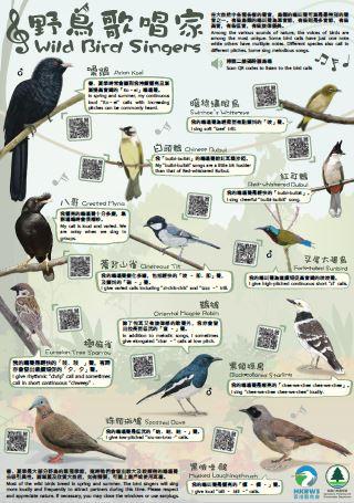 野鸟歌唱家-海报
