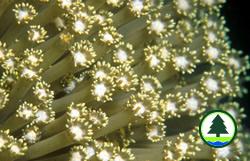 柱 角 孔 珊 瑚
