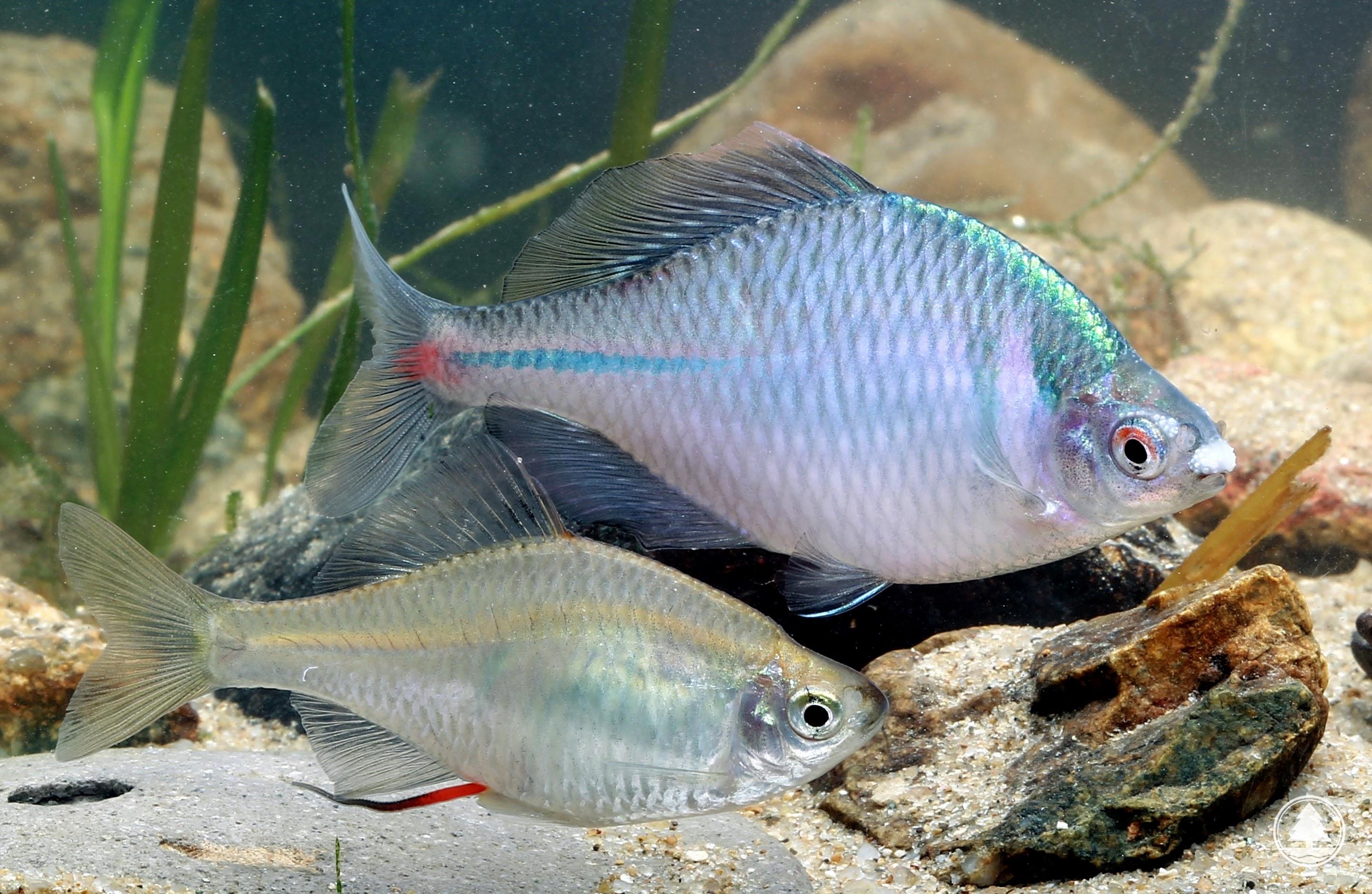 魚 日本 怪 三 大