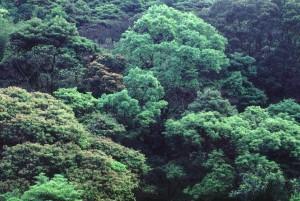 植 林 区