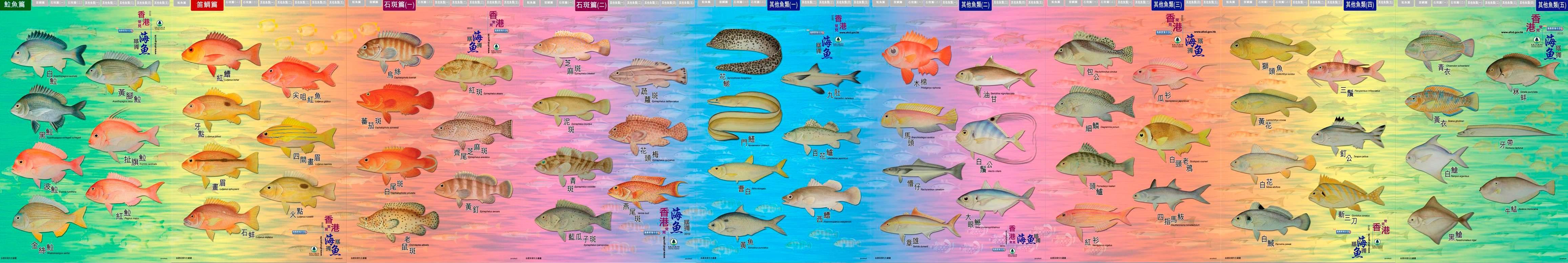 香 港 常 見 海 魚 系 列 海 報
