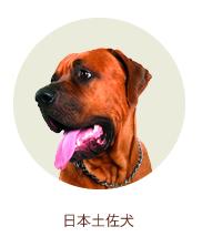 日本土佐犬